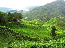 Your next dream holiday: Breatthtaking Cameron Highlands
